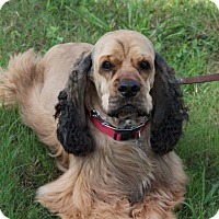 Adopt A Pet :: Sgt Oliver - Sugarland, TX