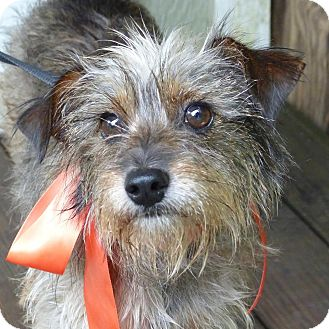 Terrier (Unknown Type, Medium) Mix Dog for adoption in Baton Rouge, Louisiana - Buffy