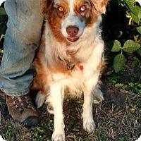 Adopt A Pet :: Skye - Minneapolis, MN