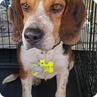 Adopt A Pet :: Rollie - Freeport, ME