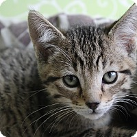Adopt A Pet :: Swiss - Red Wing, MN