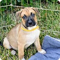 Adopt A Pet :: Bucky - Alameda, CA