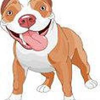 Pit Bull Terrier Mix Dog for adoption in San Bernardino, California - URGENT ON 7/14  San Bernardino