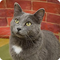 Adopt A Pet :: Lila -- $75 - NO TAIL - Hillside, IL
