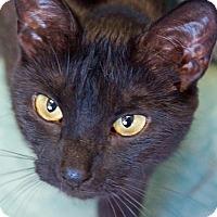 Adopt A Pet :: Bashful - Sprakers, NY
