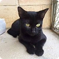 Adopt A Pet :: Daisy - Umatilla, FL