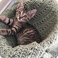 Adopt A Pet :: Nelson - Crossville, TN
