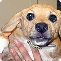 Adopt A Pet :: Marcus - Wildomar, CA