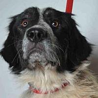 Adopt A Pet :: TRUFFLE - Ukiah, CA