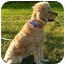 Photo 2 - Cocker Spaniel Mix Dog for adoption in Rigaud, Quebec - Missy