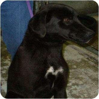 Labrador Retriever Mix Dog for adoption in Mt. Vernon, Illinois - Smiley