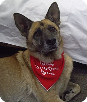 German Shepherd Dog Mix Dog for adoption in Thousand Oaks, California - Lola