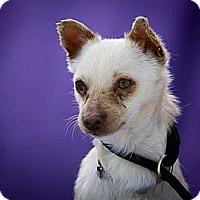 Adopt A Pet :: Pumpkin - Poway, CA