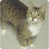 Adopt A Pet :: Allie - Chesapeake, VA