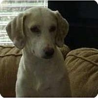 Adopt A Pet :: Ava - Raleigh, NC