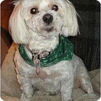 Adopt A Pet :: Lucy - Rigaud, QC