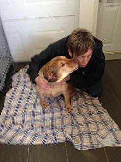 Shar Pei Mix Dog for adoption in Cornwall, Ontario - Gumbo