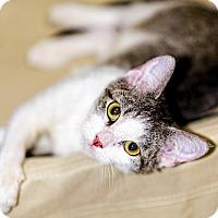 Adopt A Pet :: Artemis TM - Schertz, TX