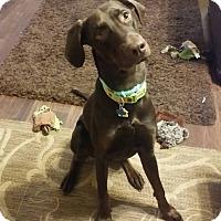Adopt A Pet :: Rune - Fort Worth, TX