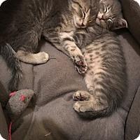 Adopt A Pet :: Giles - St. Louis, MO