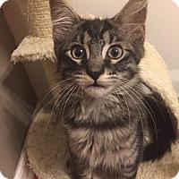 Adopt A Pet :: Wheeler - LaGrange Park, IL