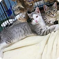 Adopt A Pet :: Bingo & Bongo - Nottingham, MD