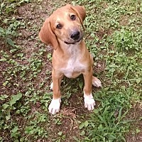 Adopt A Pet :: Colton - Ashburn, VA