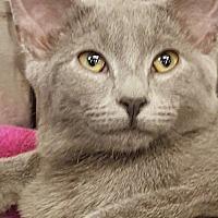 Adopt A Pet :: Fluttershy - Bensalem, PA