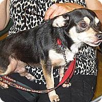 Adopt A Pet :: CHOPPY - Loxahatchee, FL