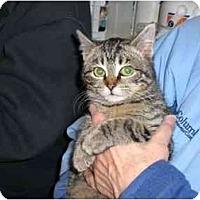 Adopt A Pet :: Hi-Tops - Lombard, IL