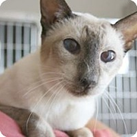 Adopt A Pet :: Amos *Cat of the Month* - Canoga Park, CA