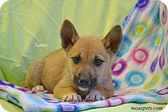 Terrier (Unknown Type, Small)/Spaniel (Unknown Type) Mix Puppy for adoption in Danielsville, Georgia - Jamie