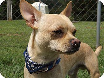 Chihuahua Mix Dog for adoption in Thomaston, Georgia - Mr. Magic