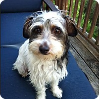Adopt A Pet :: Virginia Woof - Austin, TX