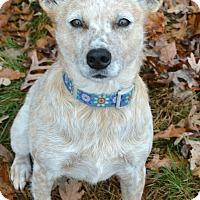 Adopt A Pet :: Dottie - Delano, MN
