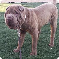 Adopt A Pet :: Stevie - Mira Loma, CA