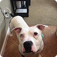 Adopt A Pet :: Herbie (Legolas) - Port Clinton, OH