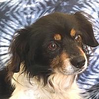 Adopt A Pet :: Mac - San Francisco, CA