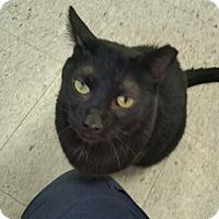 Adopt A Pet :: Marshall - Colmar, PA