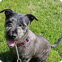 Adopt A Pet :: YOSHI - LaGrange, KY
