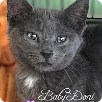 Adopt A Pet :: Doni - Island Park, NY