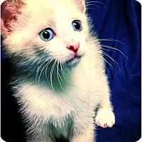 Adopt A Pet :: Crowley (avail 7/17) - Sanford, NC
