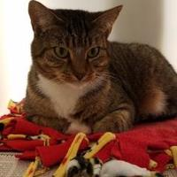Adopt A Pet :: Andi 634-17 - Cumming, GA