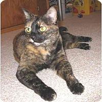 Adopt A Pet :: Suka - Mesa, AZ