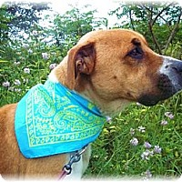 Adopt A Pet :: OSCAR ( NEEDS FOSTER) - Wakefield, RI