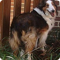 Adopt A Pet :: Sadie Mae - Charlottesville, VA