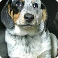 Adopt A Pet :: Daisy - Albert Lea, MN