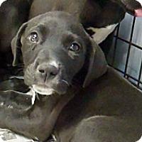 Adopt A Pet :: Tango - Philadelphia, PA