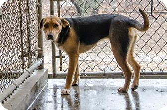 Hound (Unknown Type) Mix Dog for adoption in Peace Dale, Rhode Island - Janie