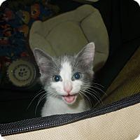 Adopt A Pet :: Nigel - Medina, OH